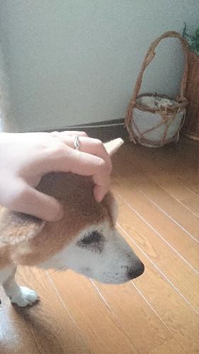 サムネイル: sakuno
